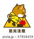 犬 柴犬 足元注意のイラスト 37958459