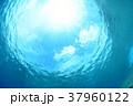 水中から見上げた空 37960122