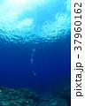 座間味ダイビング 37960162