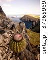 南アメリカ 南米 南米大陸の写真 37965969