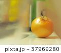 玉葱 生活感 37969280