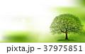 新緑 木 若葉のイラスト 37975851