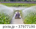 農業 背景 きれいの写真 37977190