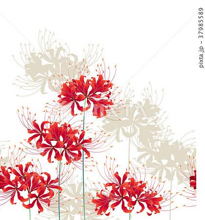 日本的な彼岸花の柄のイラスト素材 37985589 Pixta