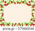 苺 果物 花のイラスト 37986046