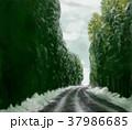 福井県 雪の鮎街道 県道17号勝山丸岡線 37986685