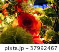 夜のバラ 37992467