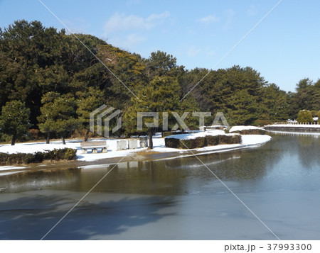稲毛海浜公園の池の雪景色 37993300