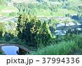 棚田 田 田んぼの写真 37994336