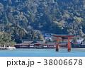 宮島 厳島神社 鳥居の写真 38006678
