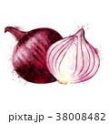 赤い 玉葱 水彩画のイラスト 38008482