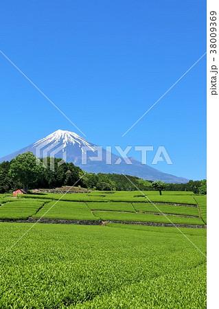 初夏の茶畑と富士山 38009369