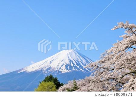風情ある日本の春 富士山と桜 38009371