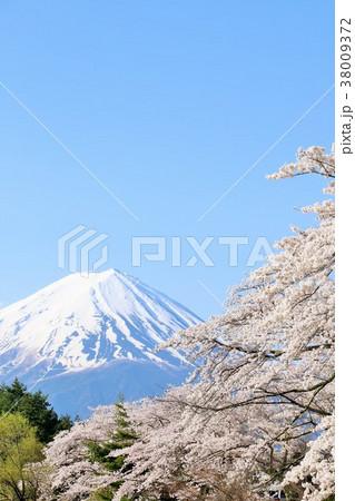 日本の春 富士山と桜 38009372