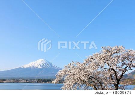 春の青空と桜 そして富士山 38009375