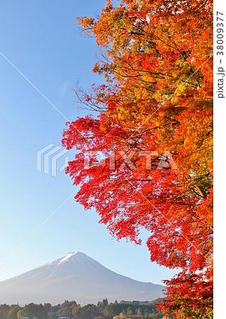 山梨県 富士山と真紅のもみじ 38009377
