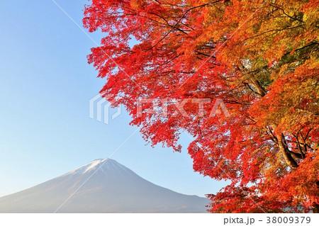 山梨県 富士山と真紅のもみじ 38009379