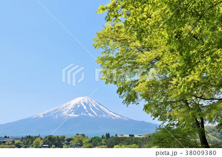 山梨県 富士山と新緑のもみじ 38009380
