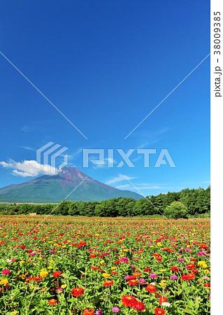夏の青空と富士山と百日草 38009385