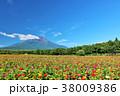 富士山 青空 花の写真 38009386