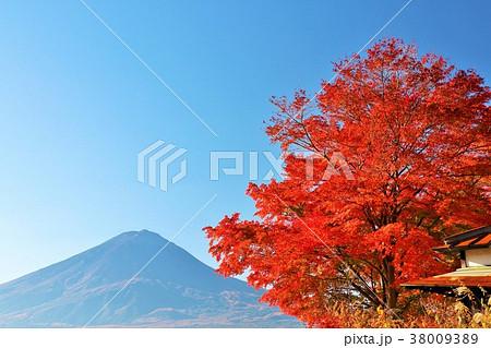 富士山と秋の紅葉 38009389
