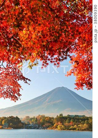 秋の紅葉と富士山 38009390