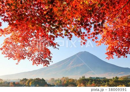 秋の紅葉と富士山 38009391