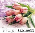 花 フラワー お花の写真 38010933