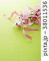 シンビジューム シンビジウム シンビデュームの写真 38011536
