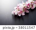シンビジューム シンビジウム シンビデュームの写真 38011547