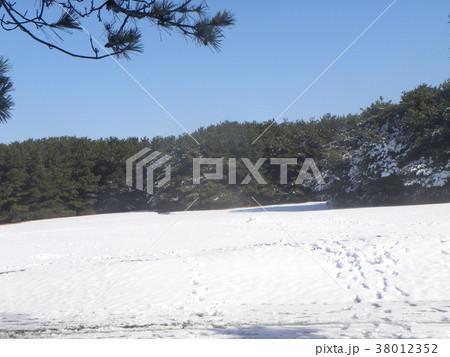 稲毛海浜公園の真っ白な広場 38012352