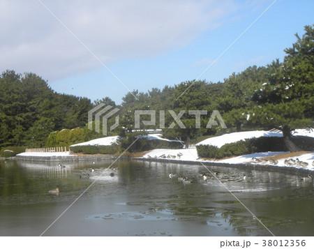 雪の次の日の稲毛海浜公園の薄氷の張った池 38012356