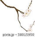 白梅 38015950