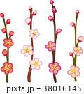 梅の花 38016145