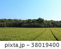 静岡県 富士宮 初夏の写真 38019400