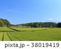 静岡県 富士宮 初夏の写真 38019419