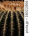 サボテン 棘 植物の写真 38022866