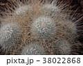 サボテン 植物 棘の写真 38022868