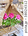 冬ぼたん咲く 福岡市筥崎宮 冬イメージ 大寒イメージ 立春イメージ 38024312