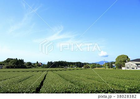 絶家風景(静岡県、富士宮、初夏) 38028382