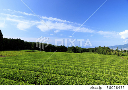 絶家風景(静岡県、富士宮、初夏) 38028435