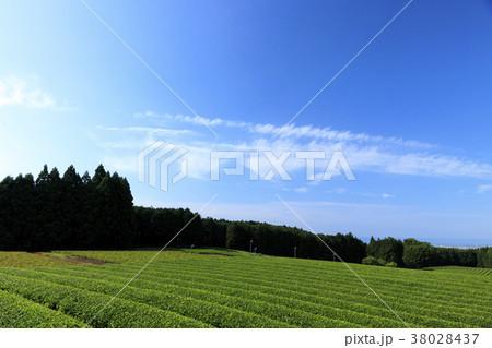 絶家風景(静岡県、富士宮、初夏) 38028437