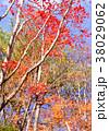 秋 植物 葉の写真 38029062