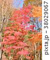 秋 植物 葉の写真 38029067