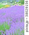 夏 花畑 ラベンダーの写真 38029156
