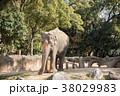 象 天王寺動物園 アジアゾウの写真 38029983