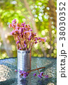 Gypsophila flower in tin. 38030352
