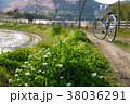 ロツメグサ 桜並木 38036291