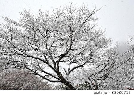 雪の華 雪と枝模様 白い木 雪化粧 雪の里山 白い里山 雪の日 雪の木立  38036712