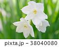 白い房咲き水仙 38040080